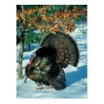 Turquía real tarjeta postal