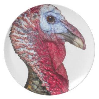Turquía salvaje - gallopavo del Meleagris Platos De Comidas