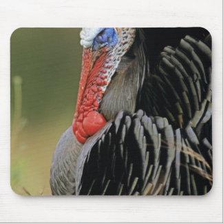 Turquía salvaje, gallopavo del Meleagris, varón Tapete De Ratón