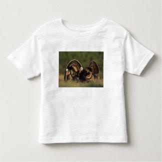 Turquía salvaje, gallopavo del Meleagris, varones Tee Shirt