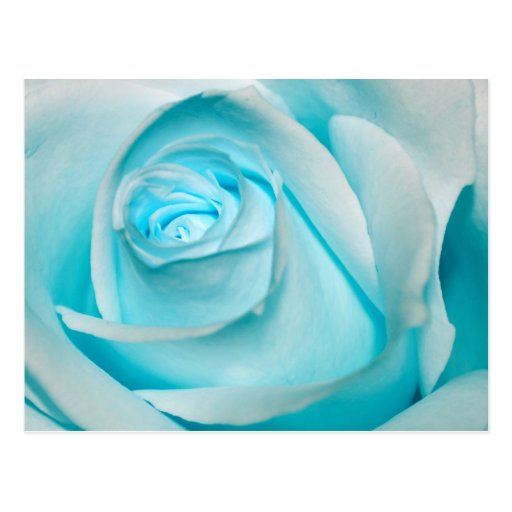 Turquoise Ice Rose Postcard