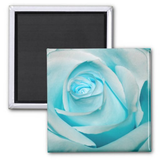 Turquoise Ice Rose Refrigerator Magnets