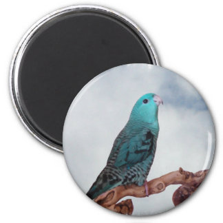 Turquoise linnie magnet