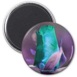 Turquoise Rosebud Flower Photography Magnet