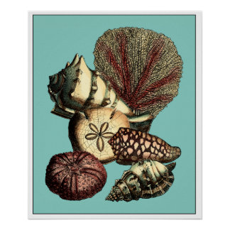 Turquoise Shell and Red Coral Collection Poster