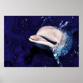Tursiops del delfín de Bottlenose de Micronesia, P Impresiones