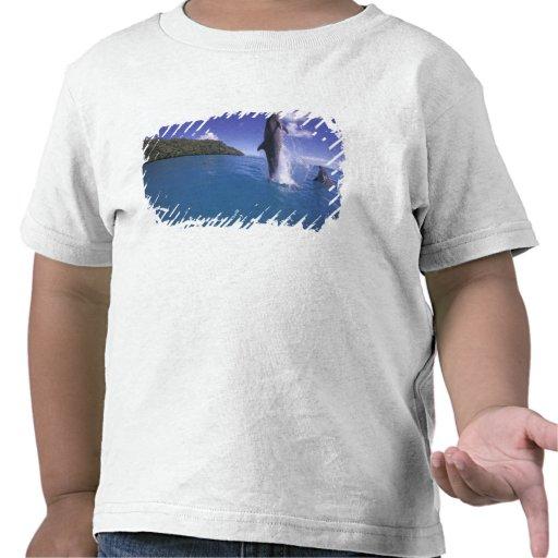 Tursiops del dophin del Bottlenose de Micronesia, Camiseta
