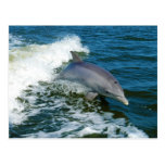 Tursiops Truncatus del delfín de Bottlenose Postales