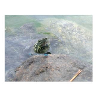 Turtle and Damselfly Postcard