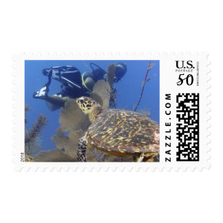 Turtle and diver, Grand Cayman Postage