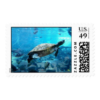 Turtle and fish stamp