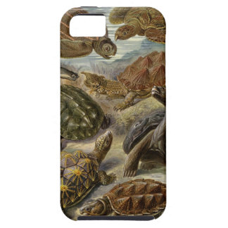 Turtle and Tortoise by Ernst Haeckel iPhone 5 Case