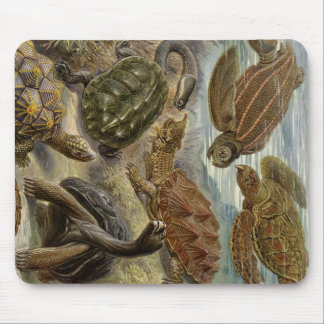 Turtle and Tortoise by Ernst Haeckel Mousepad