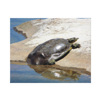 Turtle at rest stretched canvas print