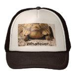 Turtle Butt Design Hats