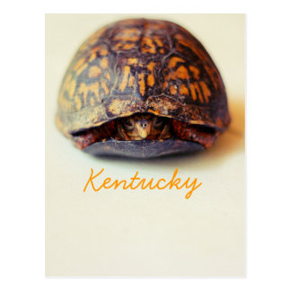 Turtle by JerseyFawn Post Cards