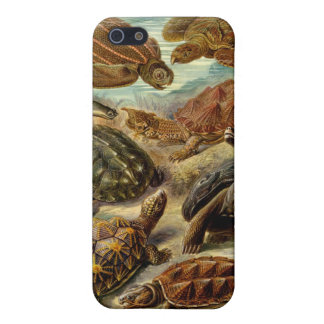 Turtle (Chelonia) by Haeckel Cover For iPhone SE/5/5s