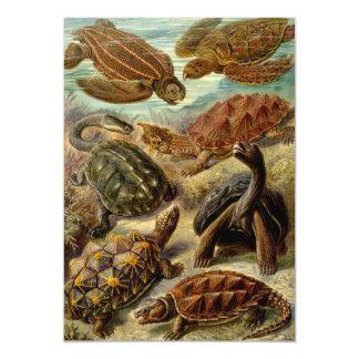 Turtle (Chelonia) by Haeckel Invitation