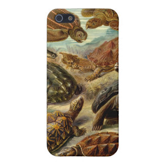 Turtle (Chelonia) by Haeckel iPhone SE/5/5s Cover
