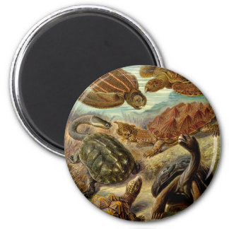Turtle Chelonia by Haeckel Magnet