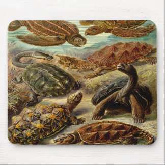 Turtle (Chelonia) by Haeckel Mousepad