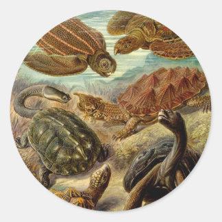 Turtle (Chelonia) by Haeckel Round Sticker