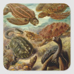 Turtle (Chelonia) by Haeckel Square Sticker