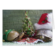 Turtle Christmas Card at Zazzle