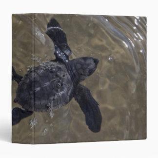 Turtle hatchlings 2 binders