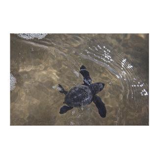Turtle hatchlings 2 canvas print