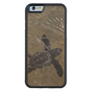 Turtle hatchlings 2 carved® maple iPhone 6 bumper case