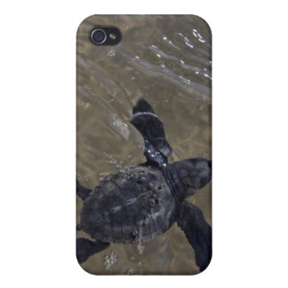 Turtle hatchlings 2 case for iPhone 4