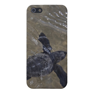 Turtle hatchlings 2 cover for iPhone SE/5/5s