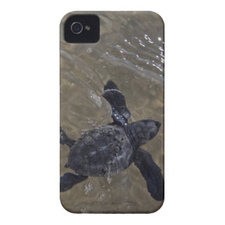Turtle hatchlings 2 iPhone 4 Case-Mate case