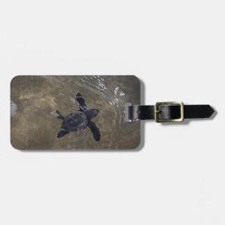 Turtle hatchlings 2 luggage tag