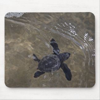 Turtle hatchlings 2 mouse pad