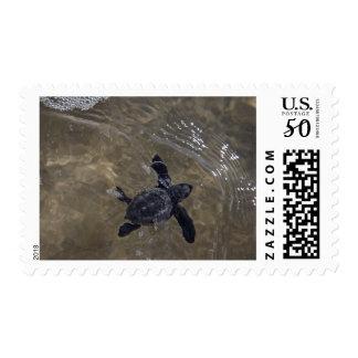 Turtle hatchlings 2 postage