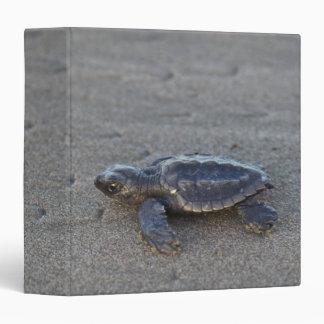 Turtle hatchlings binder