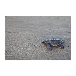 Turtle hatchlings canvas print
