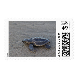 Turtle hatchlings stamps