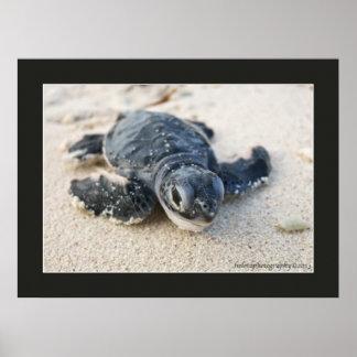 Turtle Hatchlings Poster