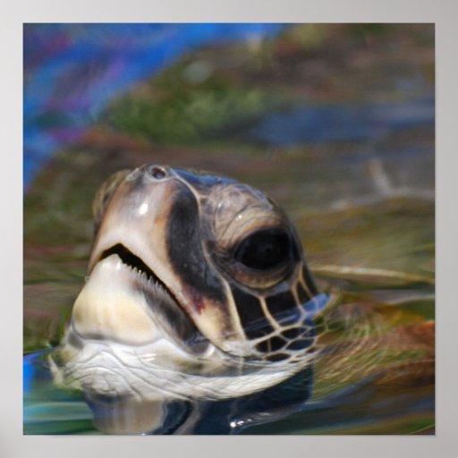 Turtle Head Print