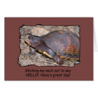 Turtle hello! card