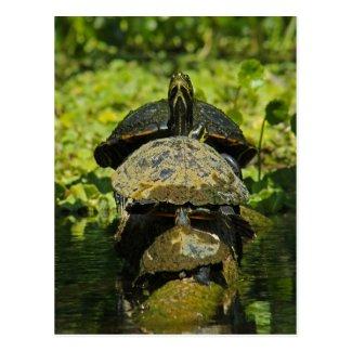 Turtle High Postcard
