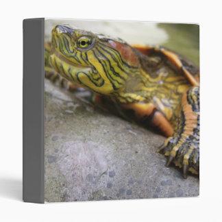 Turtle Identification Binder