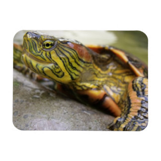 Turtle Identification Premium Magnet Rectangle Magnet