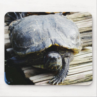 Turtle in Brazil Mouse Pad