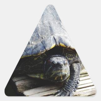 Turtle in Brazil Triangle Sticker
