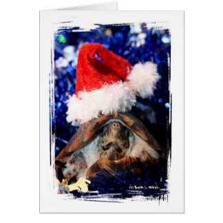 Turtle in Christmas Santa Hat Picture Card