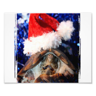 Turtle in Christmas Santa Hat Picture Photo Print